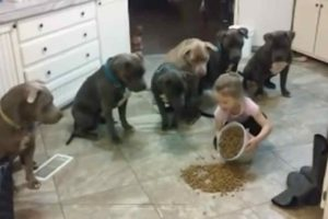 """Watch Adorable 4-Year-Old """"Pitbull Whisperer"""" Feed Her Pets"""
