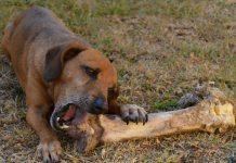 food-dog_opt