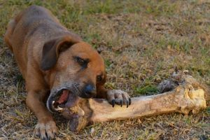 10+ Foods You Should Not Give Your Dog