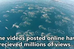 'Mermaids' Caught on Camera Turn Out to be a Swarm of Dolphins