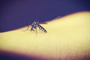 4 Kinds of People Mosquitoes Love to Bite