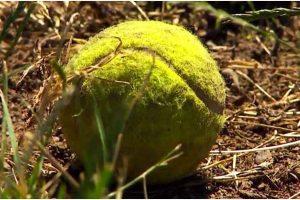 Washington Police Warns Public Not To Pick Up Stray Tennis Balls