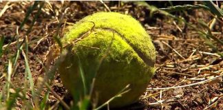 tennis ball bombs