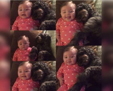 Pet Dog Dies after Shielding Baby in House Fire