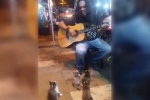 Kittens Listen to Busker Who Was Ignored by Other People