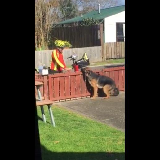 mailman dog 1