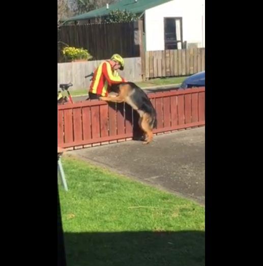 mailman dog 2