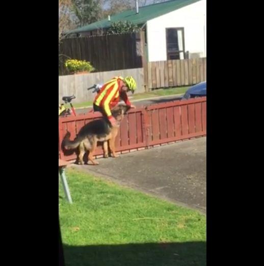 mailman dog 3