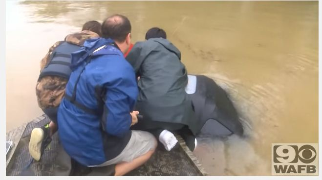 rescuing a woman and her dog in flood 2