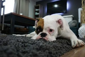 What Do Dogs See When They Watch Television?