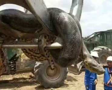"""Brazilian Construction Workers Find """"World's Largest Snake"""" In A Cave"""