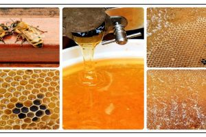 Top 20 Unusual Uses for Honey