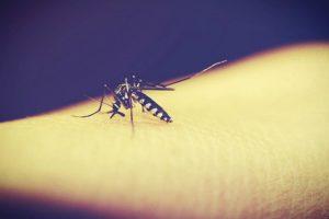 Pregnant Woman from Cebu Has Zika Virus