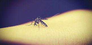 zika-virus-ph-2