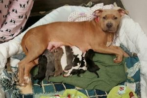 Dog 'Adopts' Puppies after Friend Dies in C-Section