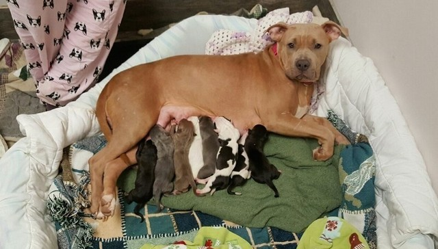Photo credit: The Dodo / Rescue Dogs Rock NYC