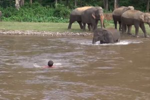 Elephant Rescues Her Favorite Person Even If He Didn't Need to Be Rescued