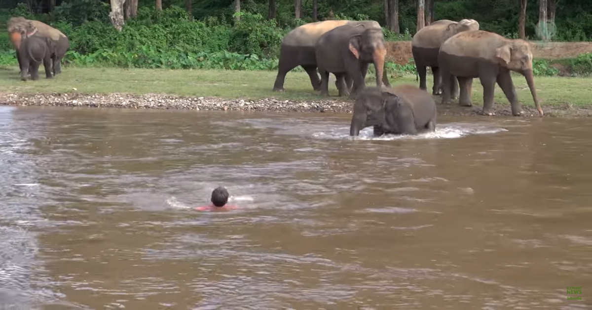 Screenshot of video by Elephant News
