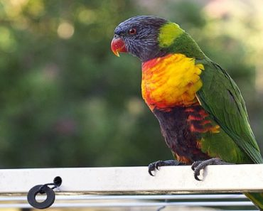 Parrot 'Reveals' Husband's Alleged Affair with Maid