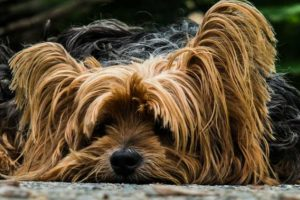 Science Says Dogs Remember What You Did