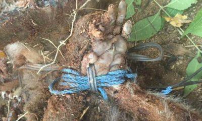 monkey-tortured-india_opt