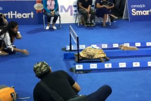 WATCH: Real Life Race Between the Rabbit and Tortoise