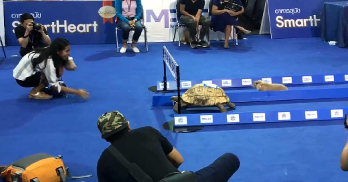 race of rabbit-and-tortoise