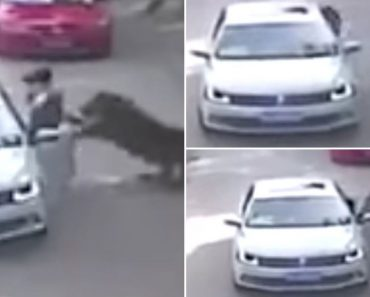 Disturbing Footage Shows Woman Being Dragged by Tiger in Beijing's Wildlife Park