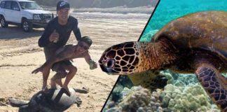 surfing-on-dead-turtle