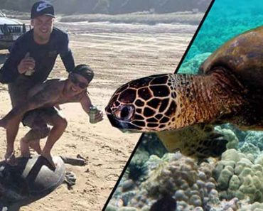 Two Idiots Slammed By Netizens And Animal Lovers For Surfing On Top Of Turtle