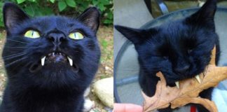 vampire-cat-monkey