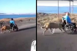 Viral Video Captures Heartwarming Moment When Dog Pushes Wheelchair-Bound Human On The Highway