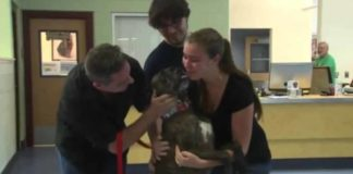 goldstone family reunites with dog 1