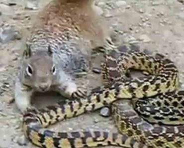 Viral Video: This Squirrel vs Snake Brawl Ended With The Most Unlikely Winner