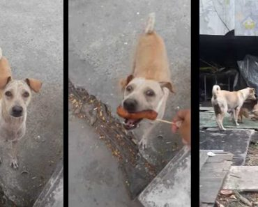 This Stray Mama Dog Begs For Food Then Brings It To Her Puppies