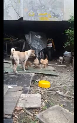 stray mama dog begs for food 4