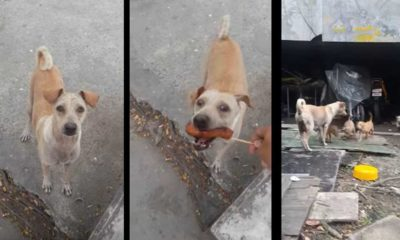 stray mama dog begs for food