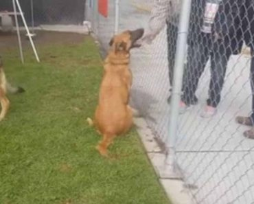 This Abandoned Shelter Dog Watched As Her Family Came And Adopted Another Dog