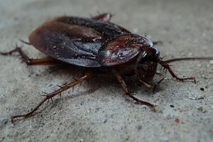 5 Natural Ways to Get Rid of Cockroaches
