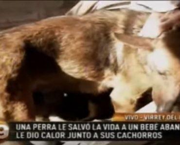 Dog Saves Abandoned Baby from Freezing