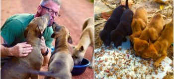 This Guy Feeds 80+ Homeless Dogs Every Day Using His Own Money!