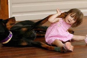 Rescue Dog Saves Girl from Venomous Snake