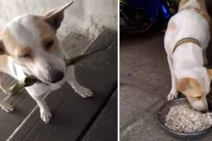 Dog Always Brings 'Gifts' to Woman Who Feeds Him