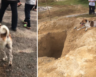 Dog Chases its Best Friend's Funeral Procession