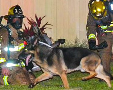 Loyal Dog Saves Children from House Fire