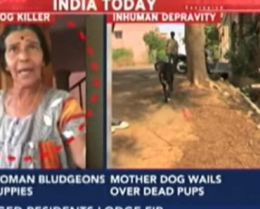 Woman Kills 8 Puppies after Dog Gives Birth at Her Gate