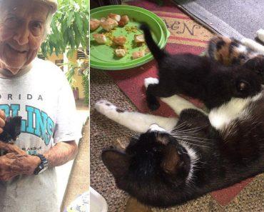 "Grandpa Secretly Raises Cats, Even if Wife Told Him ""No"""