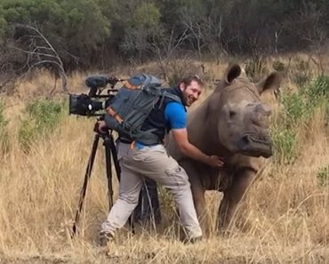 Wild Rhino Asks Photographer for a Belly Rub