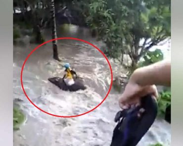 Funny Video Goes Viral of Kid More Concerned with Carabao than Drowning Man