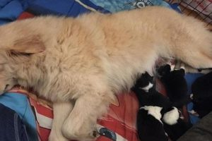 Dog Receives Foster Babies after Her Pups Died in a Fire